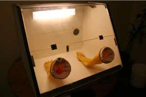 Cloning glove box flicr